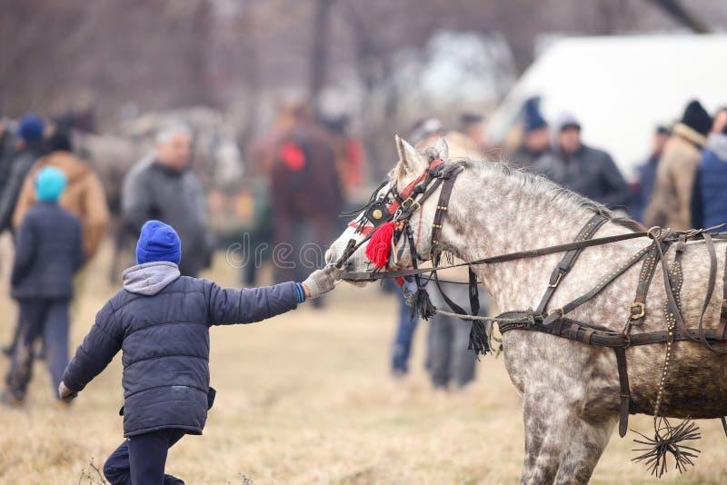 O menino novo trata um cavalo decorado antes de uma corrida de cavalos da celebração do esmagamento foto de stock royalty free