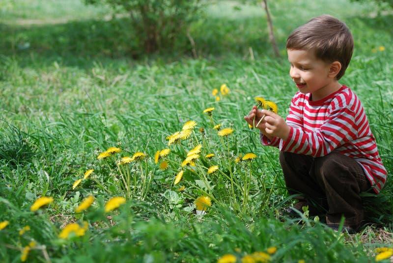 O menino olha a flor do dente-de-leão fotografia de stock