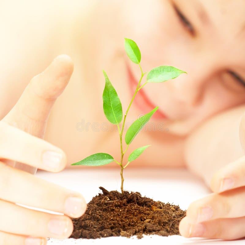 O menino olha uma planta nova fotos de stock royalty free