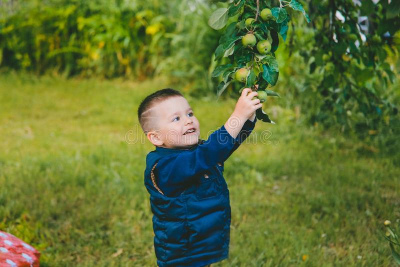 O menino quer alcançar Apple verde imagem de stock royalty free