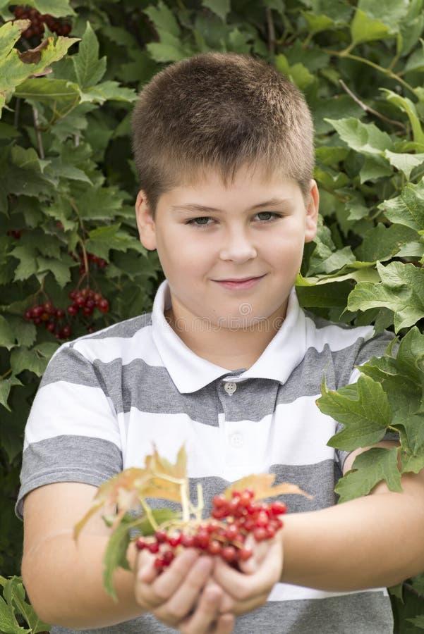 O menino recolhe bagas do viburnum no jardim foto de stock royalty free