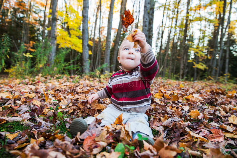 O menino senta-se sustentando as folhas de bordo em sua mão fotos de stock royalty free