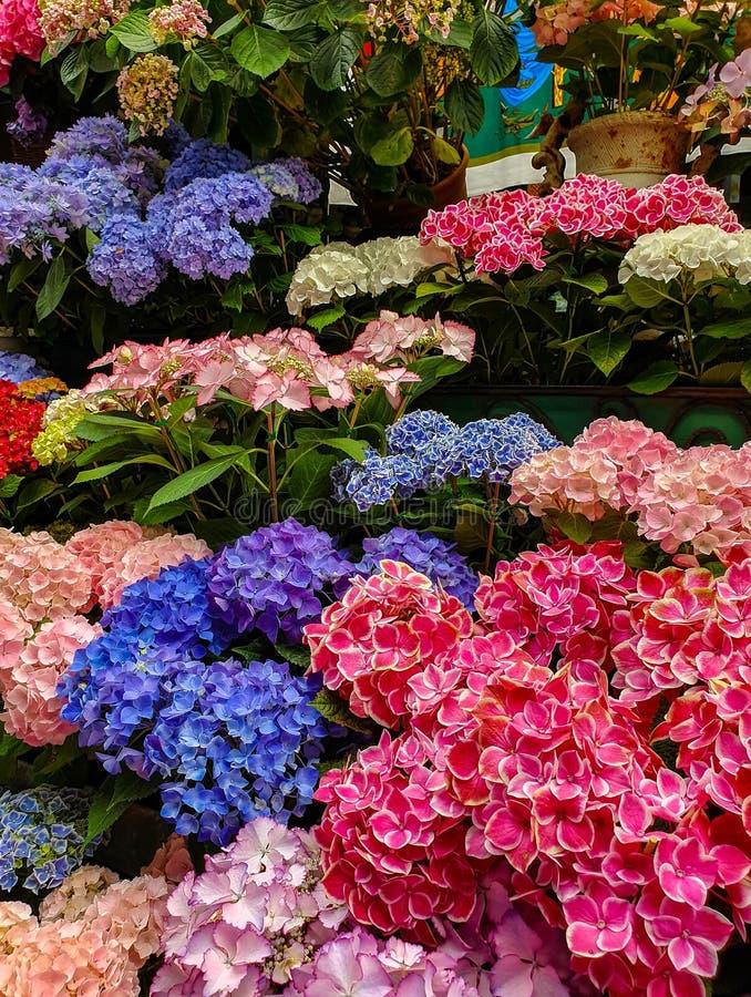 O mercado da flor em Paris localizou no Ile de la Menção, entre a capela da catedral e do Sainte-Chapelle de Notre-Dame fotografia de stock royalty free