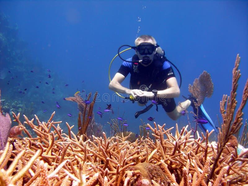 O mergulhador admira o coral do chifre do veado. fotos de stock royalty free