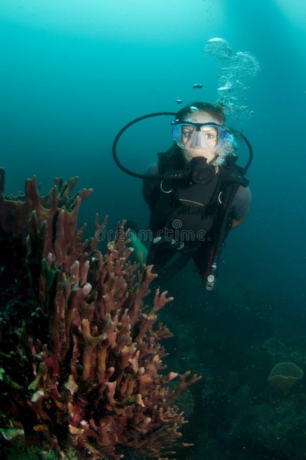 O mergulhador de mergulhador fêmea novo nada sobre o recife foto de stock