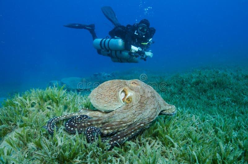 Mergulhador de mergulhador lateral da montagem com os tanques múltiplos do mergulhador fotografia de stock royalty free