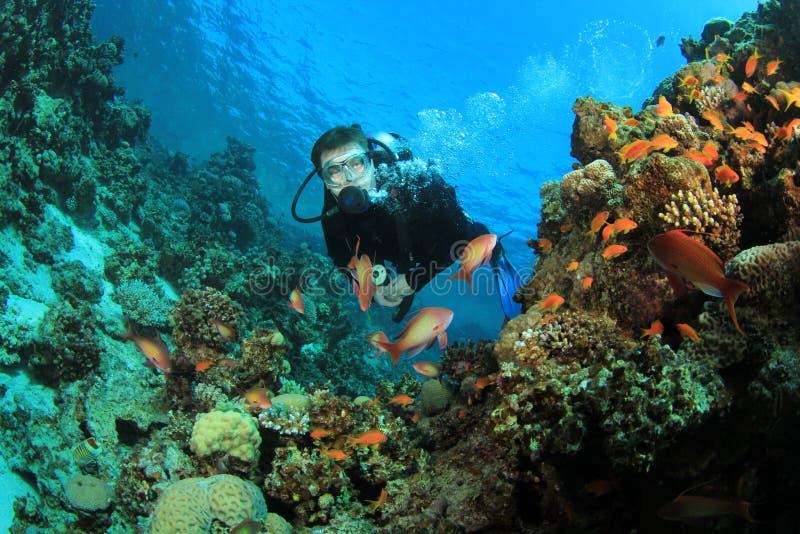 O mergulhador do mergulhador explora o recife coral foto de stock royalty free