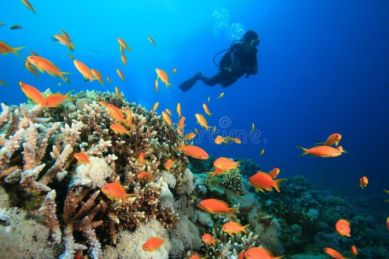 O mergulhador do mergulhador explora o recife coral bonito fotografia de stock