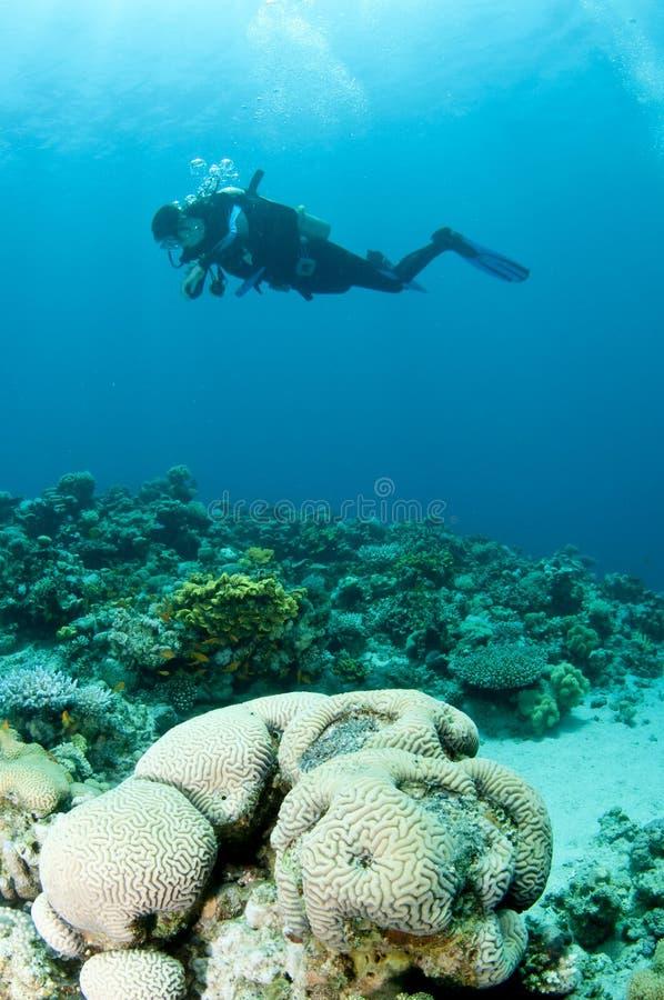 O mergulhador do mergulhador nada sobre o recife coral imagem de stock