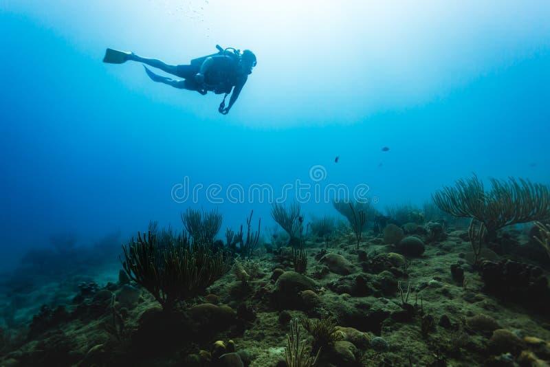 O mergulhador nada sobre o recife de corais nos trópicos imagem de stock royalty free