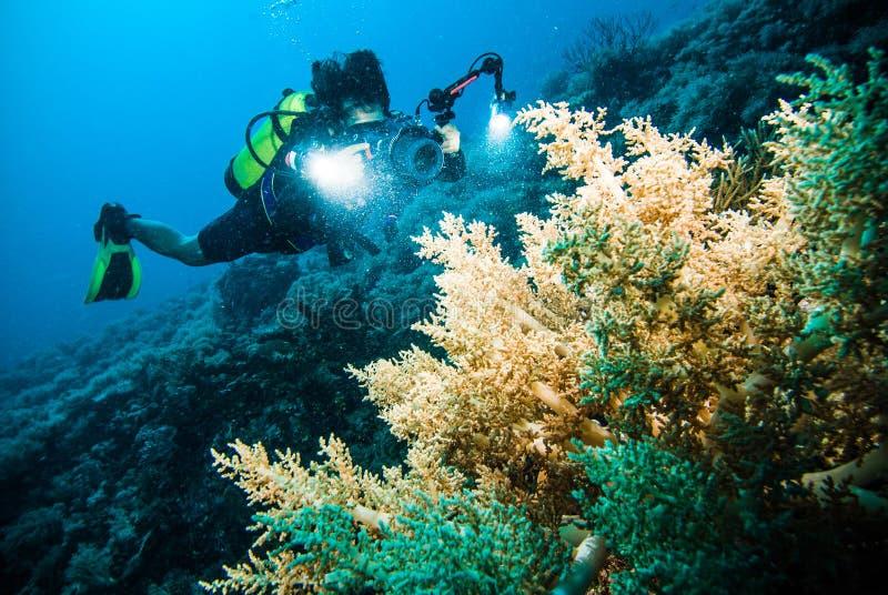 O mergulhador toma um vídeo em cima do mergulho autônomo coral de Indonésia do kapoposang fotos de stock royalty free