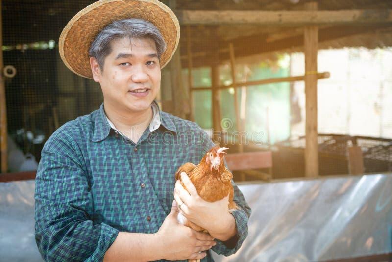 O midle de Smilling envelheceu a galinha da terra arrendada da m?o do homem do cabelo e a cesta cinzentas dos ovos em seu neg?cio imagens de stock