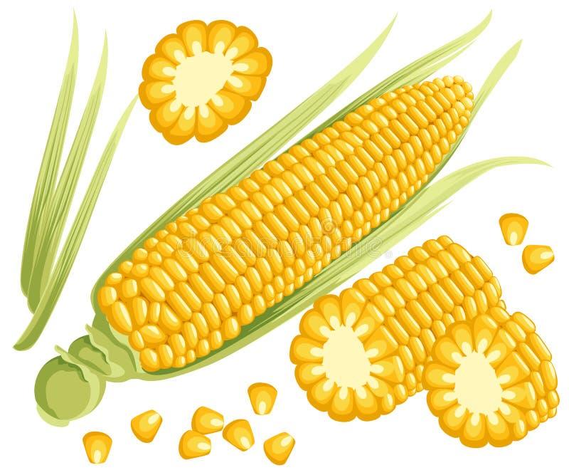 O milho amarelo nas espigas, na inflorescência masculina e nas folhas isolou a ilustração do milho dourado doce Grupo do milho fá ilustração do vetor