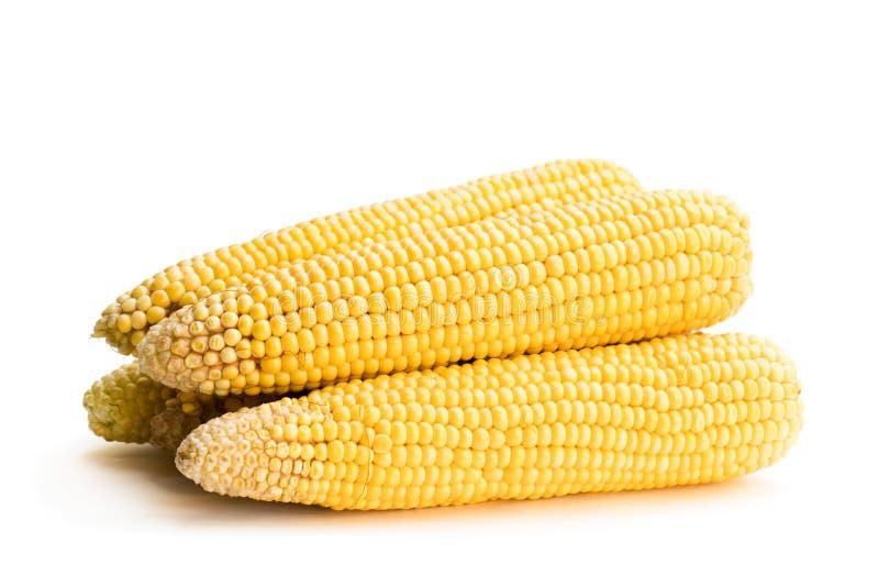 O milho doce cozinhou ou ferveu isolado no branco fotografia de stock