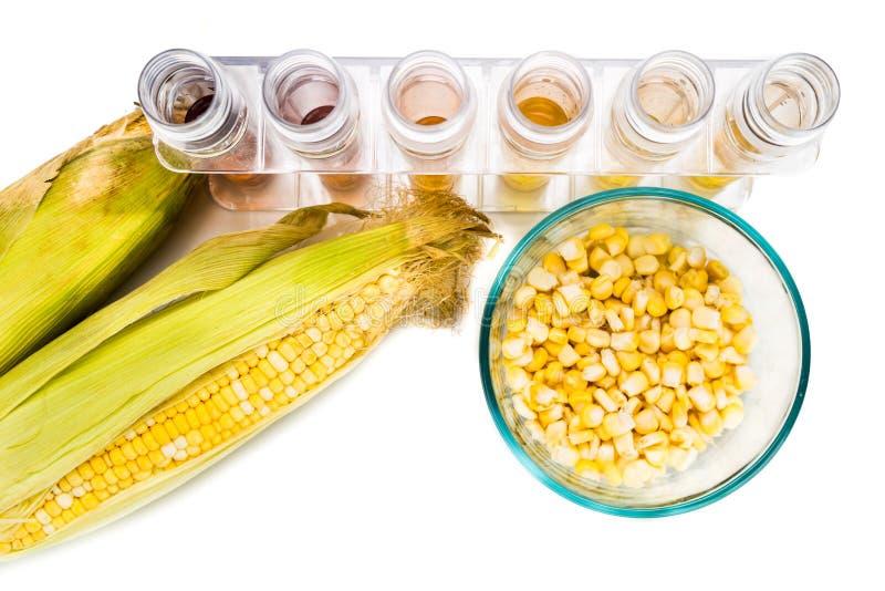 O milho gerou o combustível biológico do álcool etílico com os tubos de ensaio no backgrou branco fotografia de stock