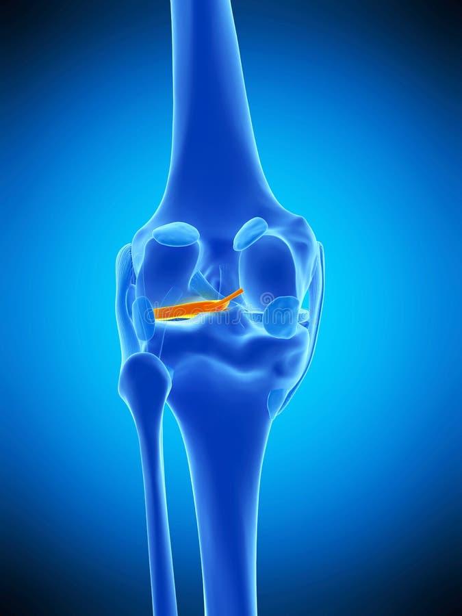 O miniscus lateral ilustração stock