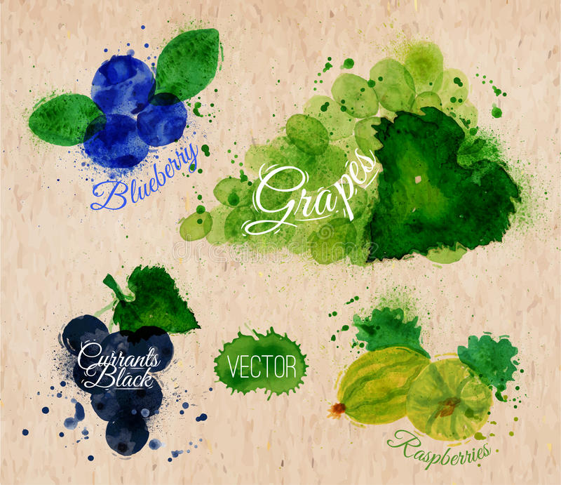 O mirtilo da aquarela do fruto, uvas, corintos enegrece ilustração do vetor