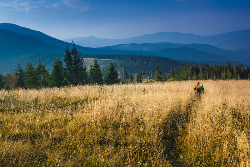 O mochileiro está andando através da grama alta nas montanhas do outono fotografia de stock royalty free