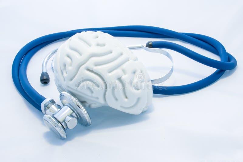 O modelo do cérebro humano com convoluções e o estetoscópio azul estão no fundo uniforme branco Saúde da foto do conceito ou pato imagem de stock