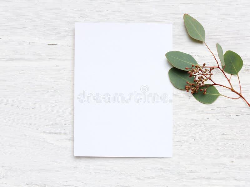 O modelo feminino do desktop do casamento com o cartão de papel vazio e o populus do eucalipto ramificam no fundo gasto branco da foto de stock