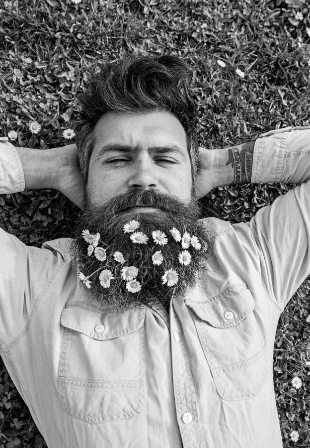 O moderno na cara calma do sono coloca na grama, vista superior O homem com barba e bigode aprecia a mola, fundo do prado guy imagens de stock royalty free