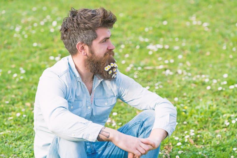 O moderno na cara calma senta-se na grama Conceito do barbeiro Homem com barba e o bigode longos, prado verde defocused fotos de stock