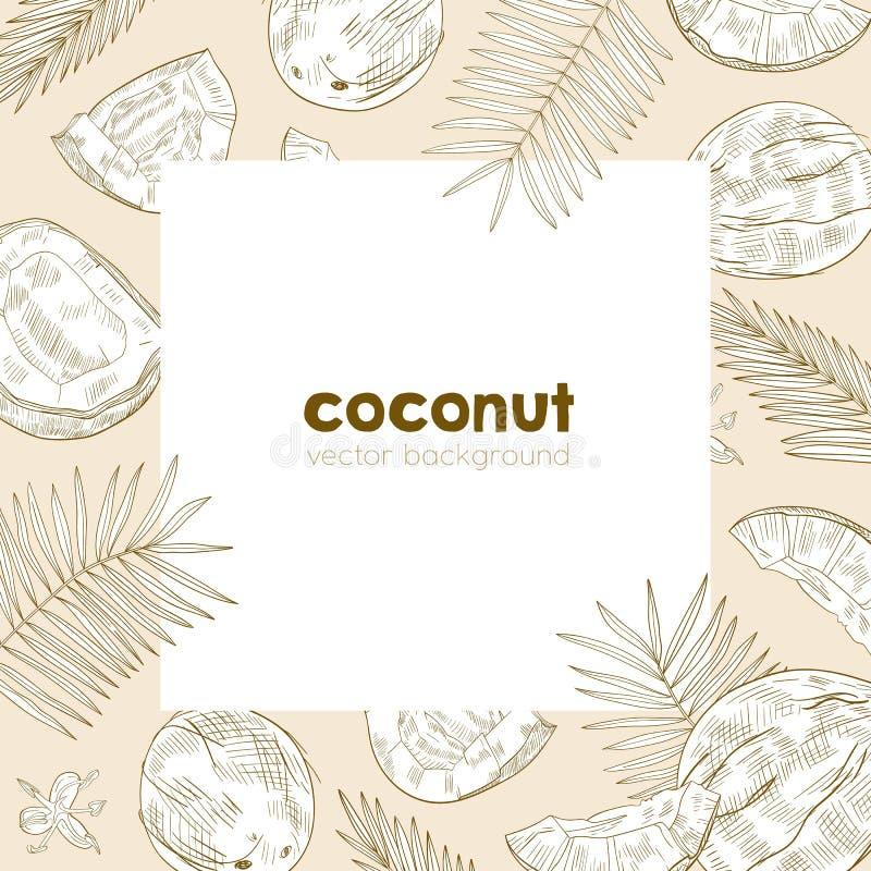 O molde do fundo do quadrado do verão com quadro fez de cocos maduros frescos, folhas da palmeira e as flores entregam tirado com ilustração stock