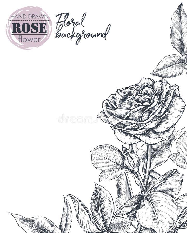 O molde do vetor para o cartão ou o convite com a mão tirada aumentaram flores ilustração stock