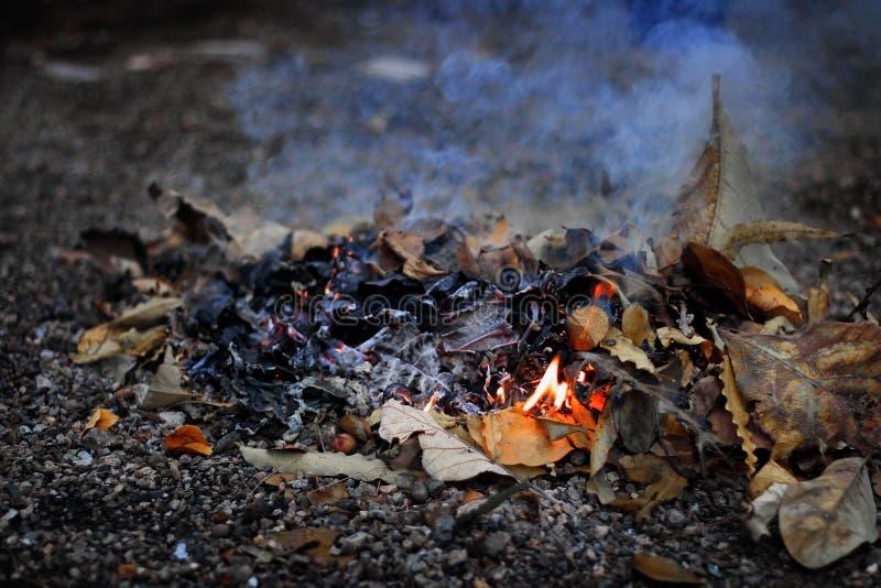 O montão de lixo das folhas secas é queimado com fogo e fumo fotos de stock