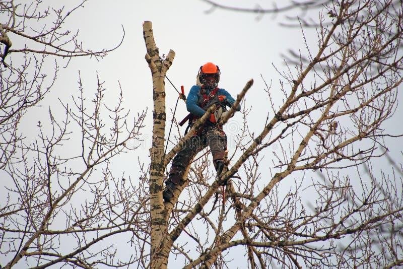 O montanhista industrial corta os ramos altos em uma árvore imagem de stock royalty free