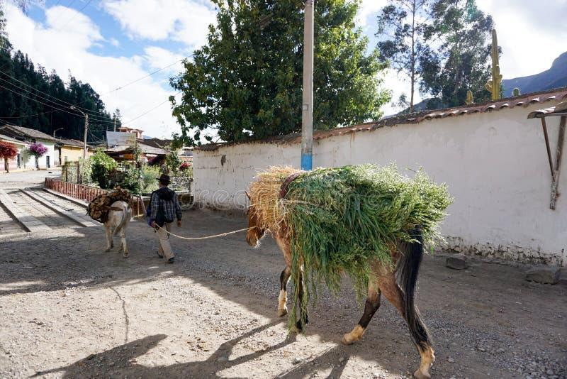 O muleskinner e o fazendeiro peruanos trazem seus mercadorias ao mercado local da cidade para a venda foto de stock