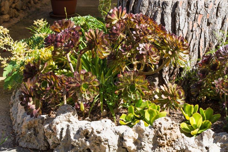 O mundo bonito da planta do sul imagens de stock royalty free