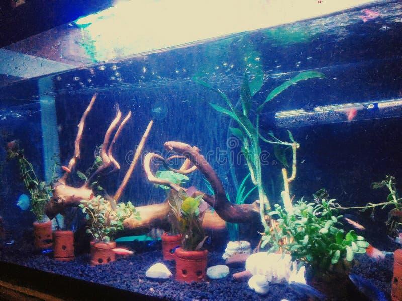 O mundo de subaquático foto de stock royalty free