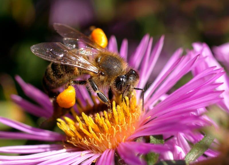 Download O mundo dos insetos foto de stock. Imagem de flores, mosca - 16853090
