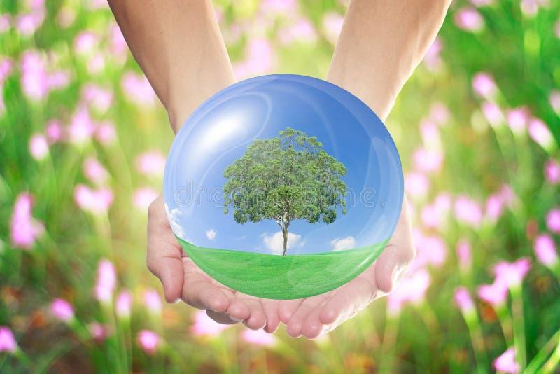 O mundo natural nas mãos de todos imagem de stock royalty free