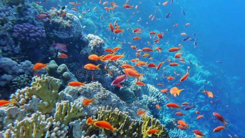 O mundo subaquático do mar imagens de stock