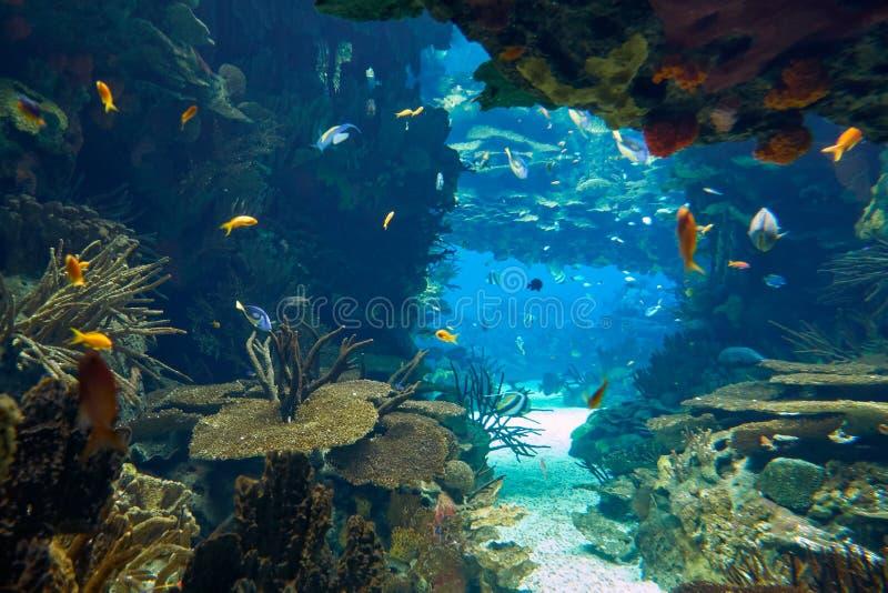 O mundo subaquático no tanque principal da Lisboa Oceanarium portugal foto de stock
