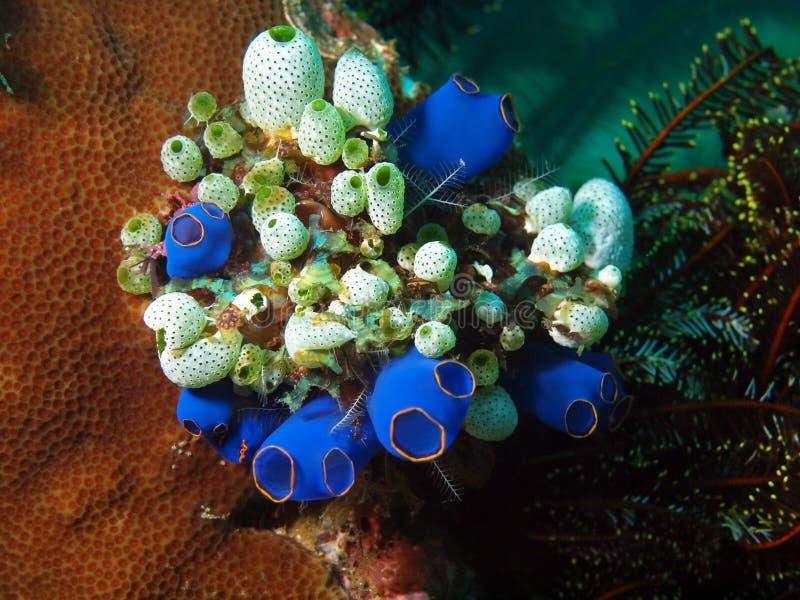 O mar esguincha imagens de stock