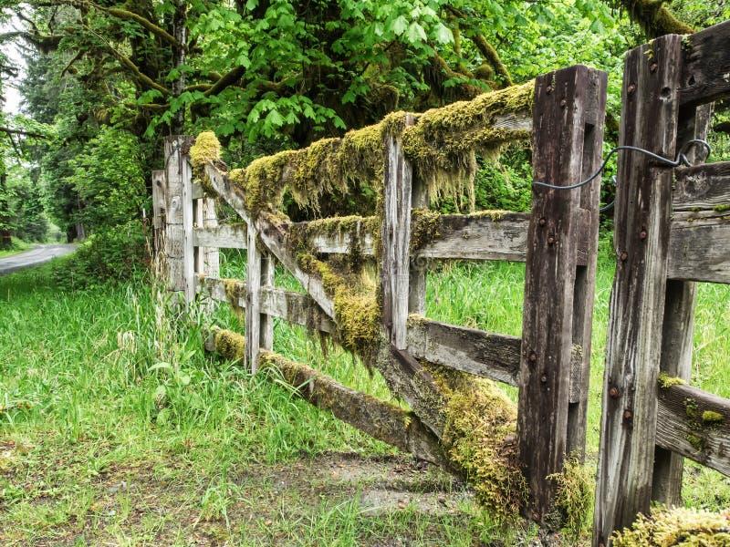 O musgo cobriu a cerca de madeira foto de stock royalty free