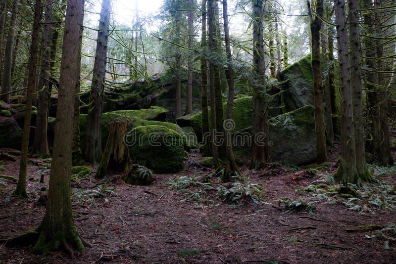 O musgo cobriu a floresta foto de stock royalty free