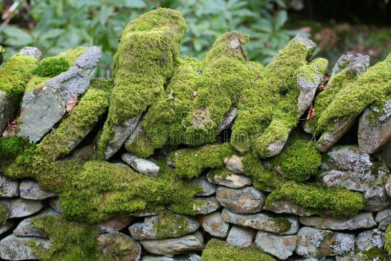 O musgo cobriu a parede de pedra fotografia de stock royalty free