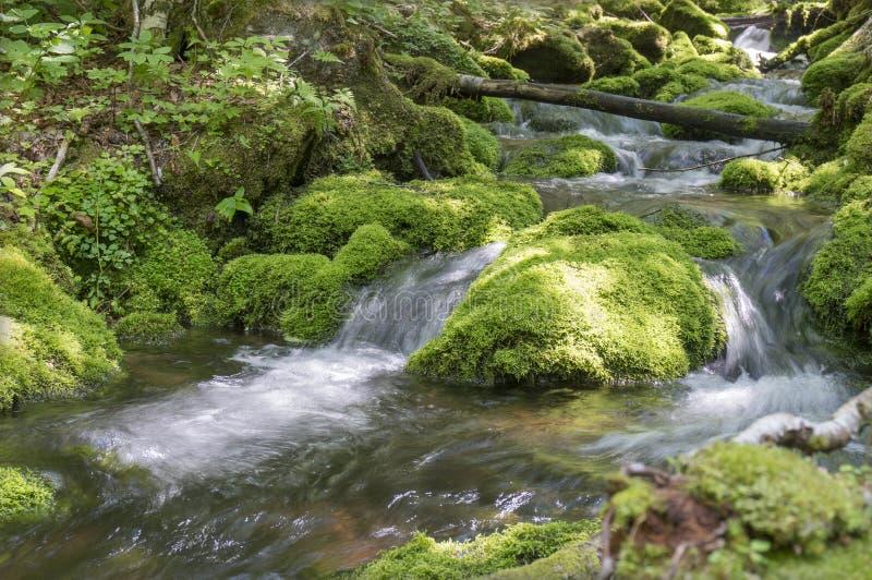 O musgo cobriu pedras em um ribeiro na montagem Carleton, Novo Brunswick, Canadá imagens de stock
