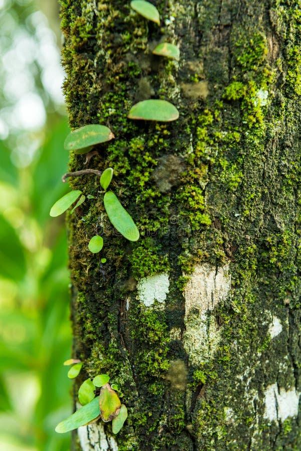 O musgo cresce pesadamente na casca desta árvore imagem de stock