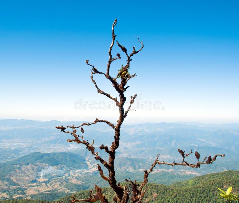O musgo inoperante seco das árvores cresce em um ramo de árvore imagem de stock