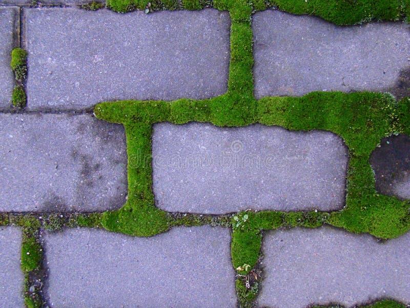 O musgo verde peludo cresceu em torno dos tijolos fotografia de stock