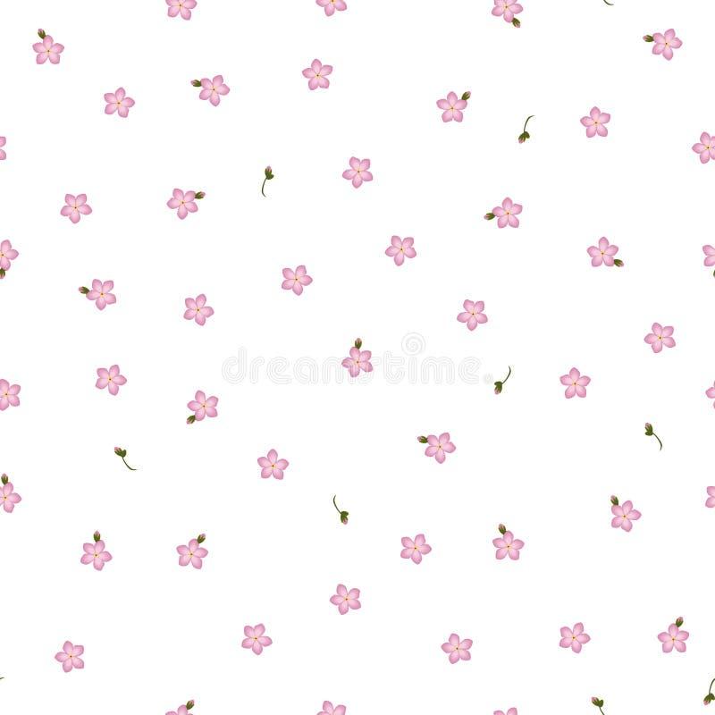O Myosotis floral sem emenda do rosa do teste padrão floresce com o botão no branco ilustração do vetor