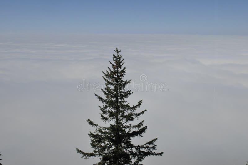 O névoa-oceano sobre os cumes suíços vistos de Rigi-Kulm perto de Kaltb imagem de stock royalty free