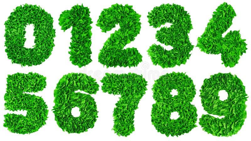 O número feito a mão ajustou-se das sucatas de papel verdes ilustração do vetor