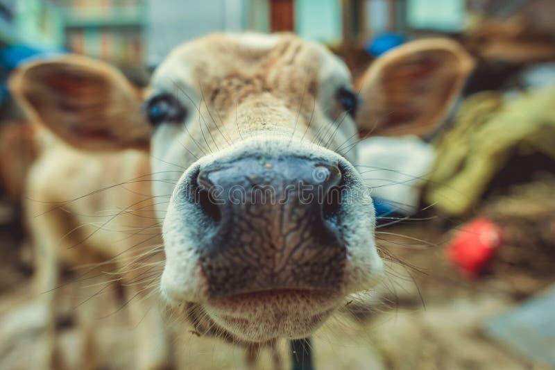 O nariz e o focinho fotografia de stock