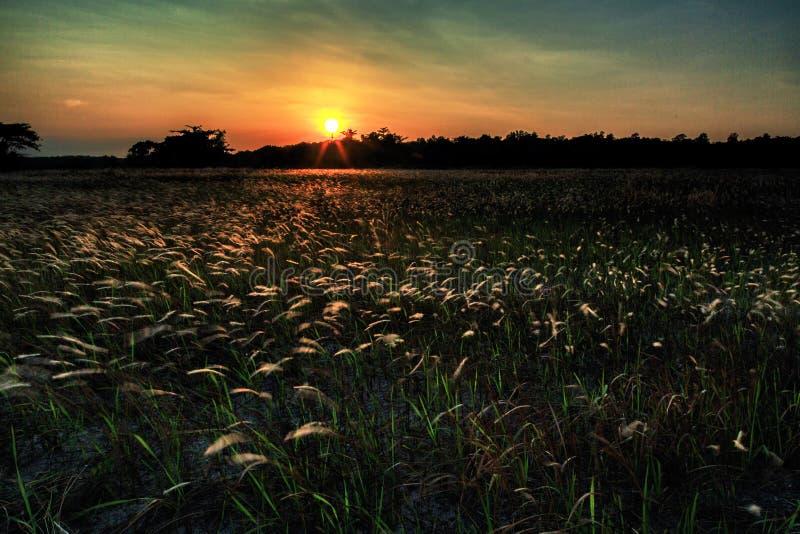 O nascer do sol bonito e cobre com sapê na praia do aru de Tanjung, Labuan Malásia 23 fotos de stock